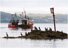 The Fishermen.