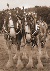 Two Shires, 1980.